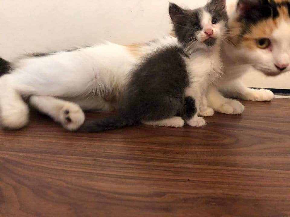 кошка и котенок в доме