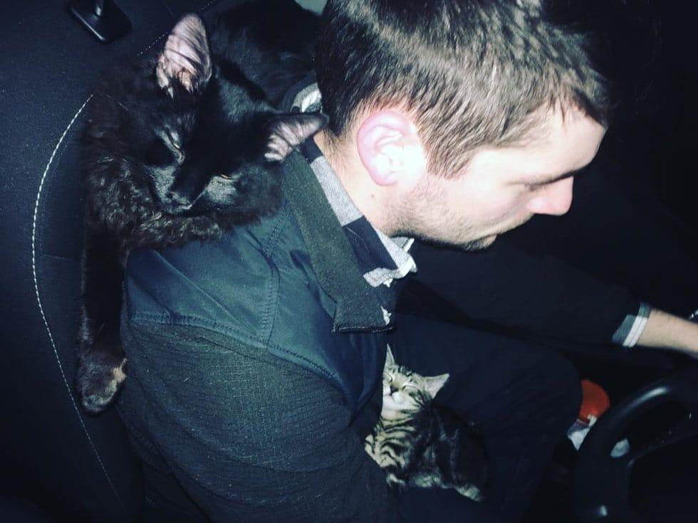кот на плечах хозяина