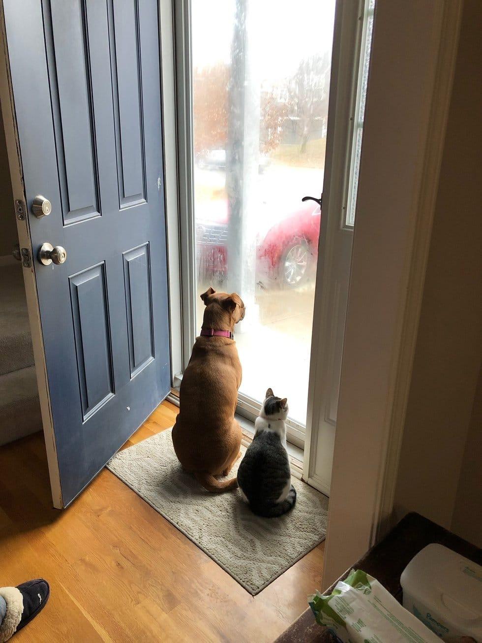 кот и собака у дверей