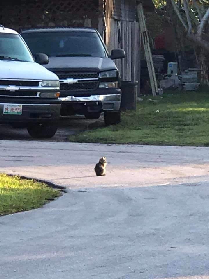 котенок на дороге