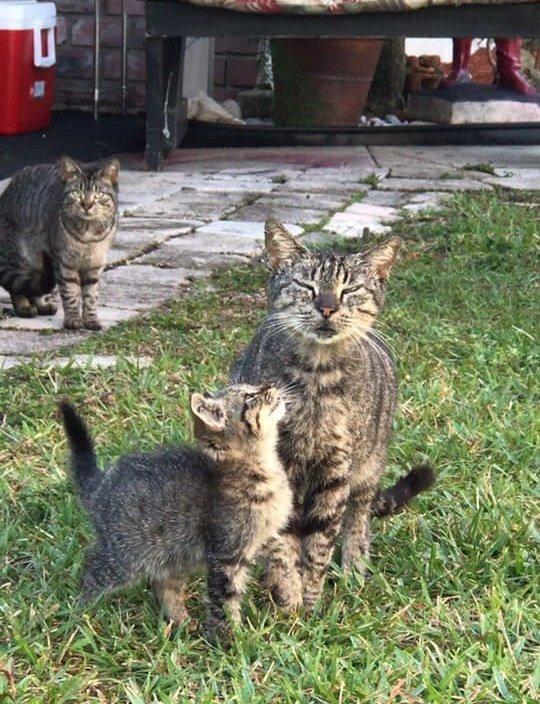 коты на улице