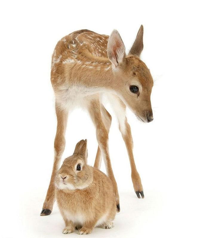 Олененок с кроликом