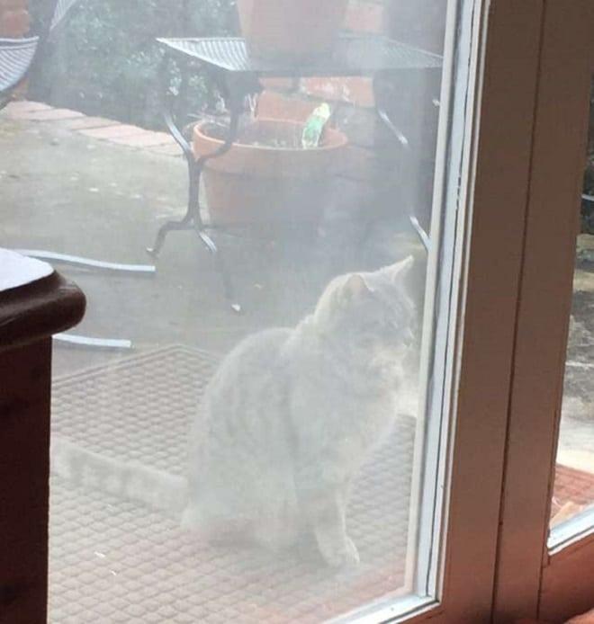 Кошка у дверей
