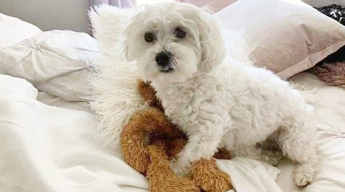 Собачка с игрушкой