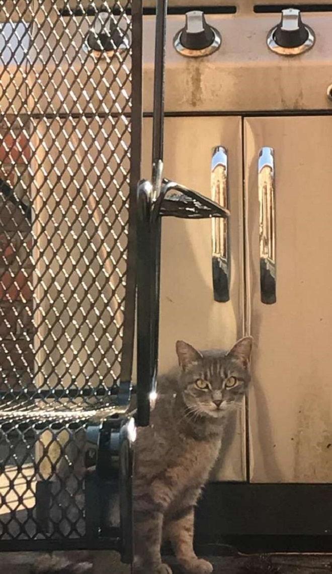 Кошка и шкафчик