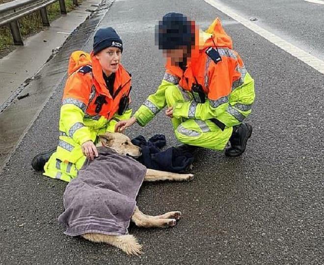 Собака и спасатели