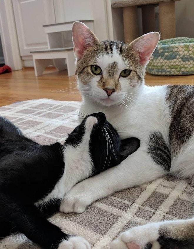 Кошка смотрит на кота