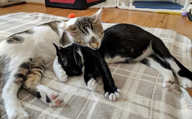 Котики спят