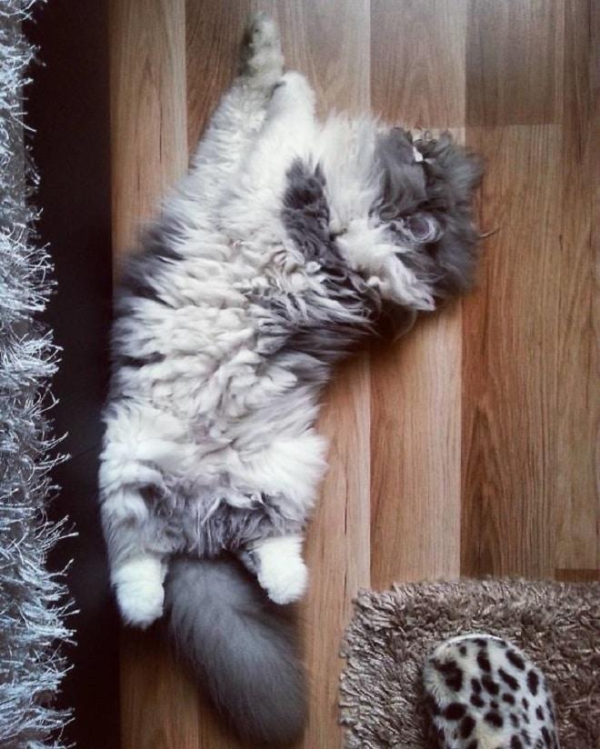 Кот лежит рис 2