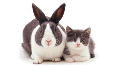 cat and bunny заглавная