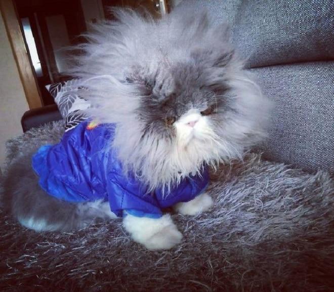 Одетый кот