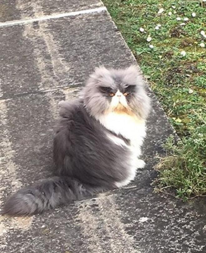 Кот сидит рис 2