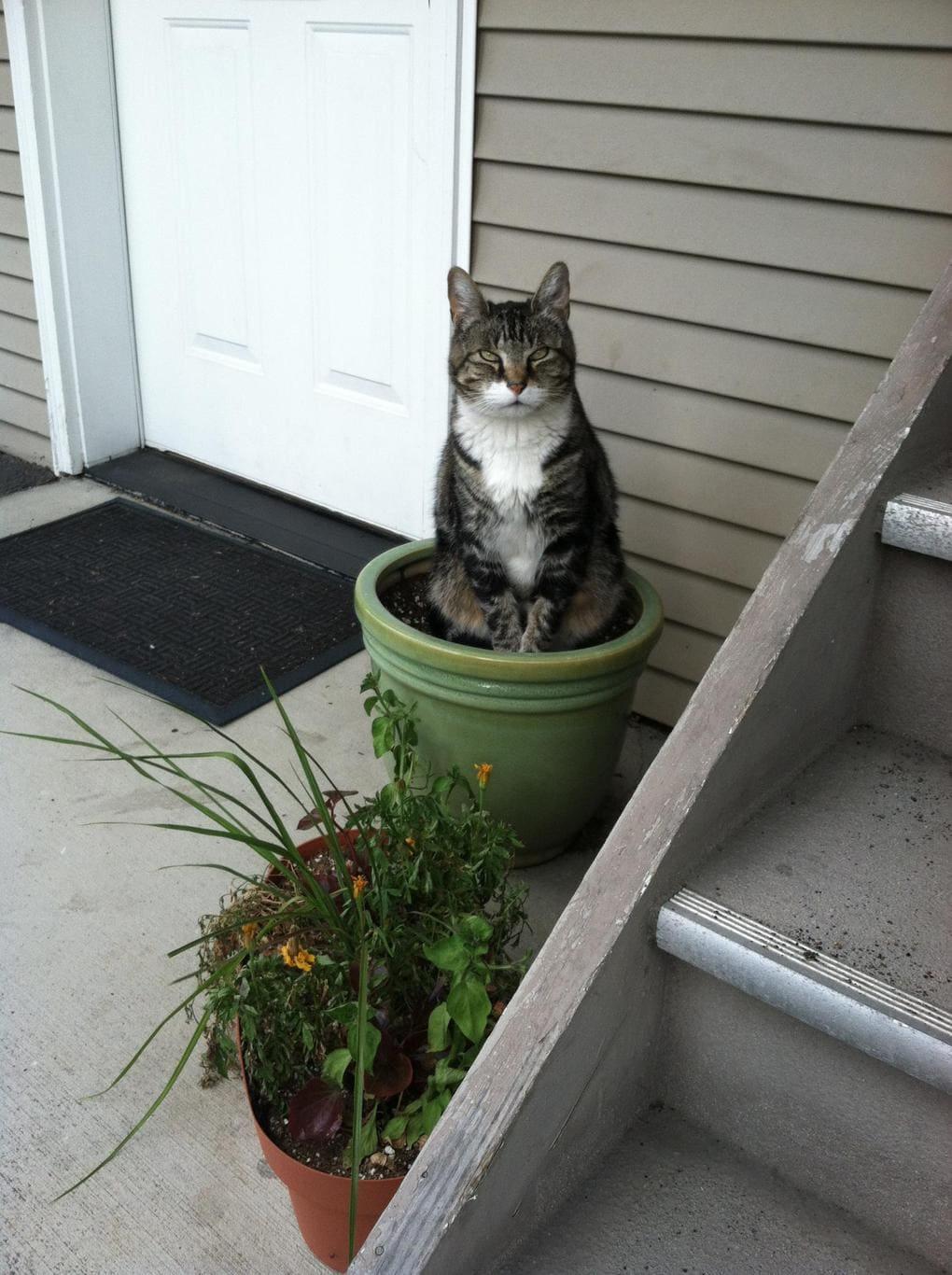 кот в горшке рис 5