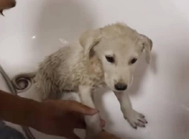 Щенок в ванной