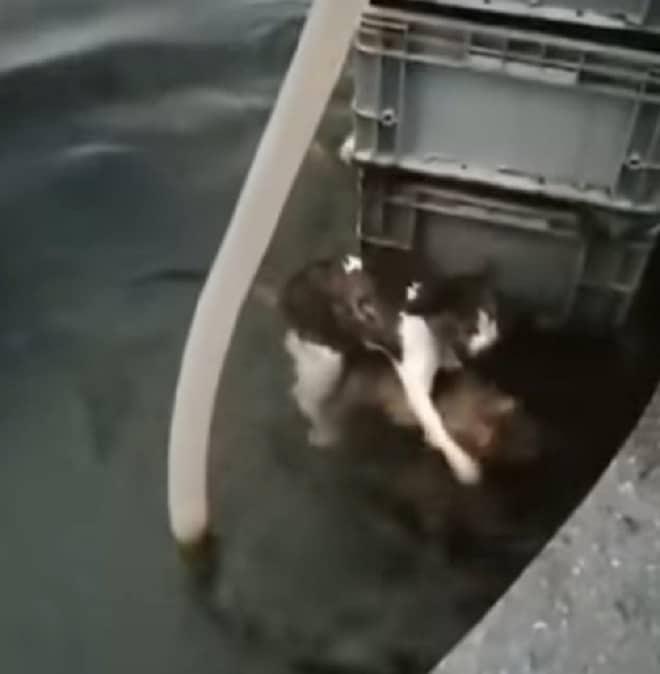 Кот и щенок в воде