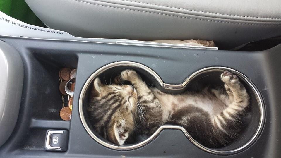 спящий кот рис 2