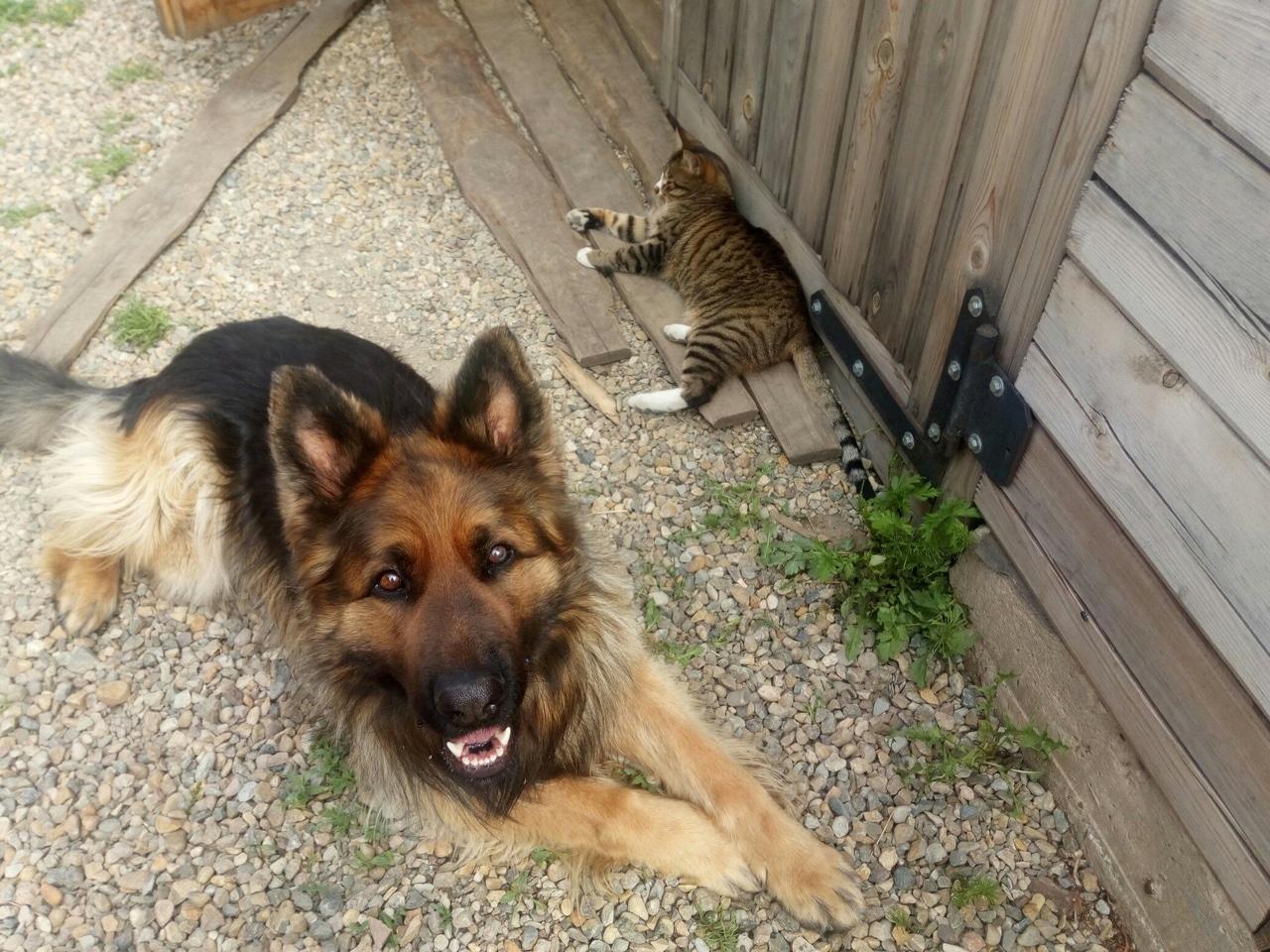 кот и пес на улице