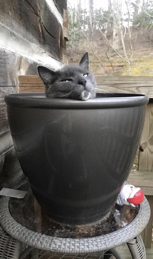 кот в горшке рис 4