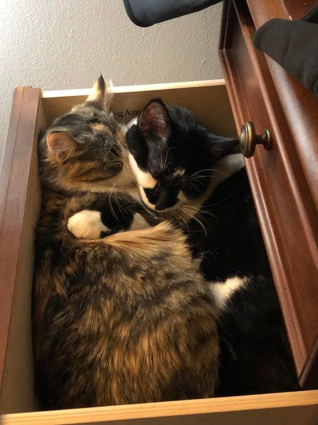 коты в ящике