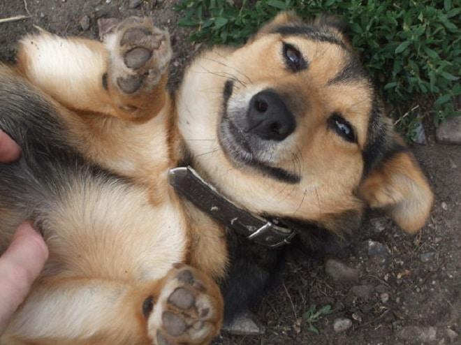 Довольная собачка