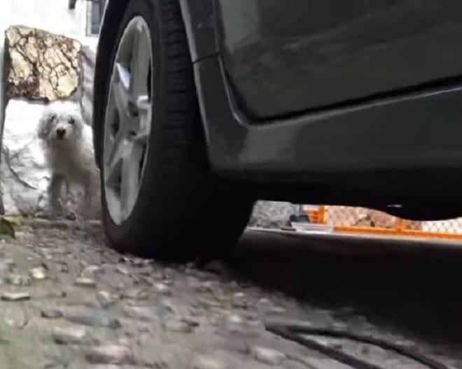Собака возле машины