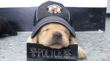 sleeping police dog