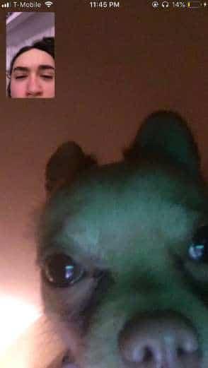 пес на экране