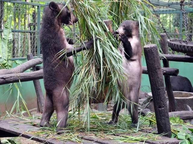 медведи играют