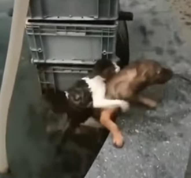 Кот держится за собаку