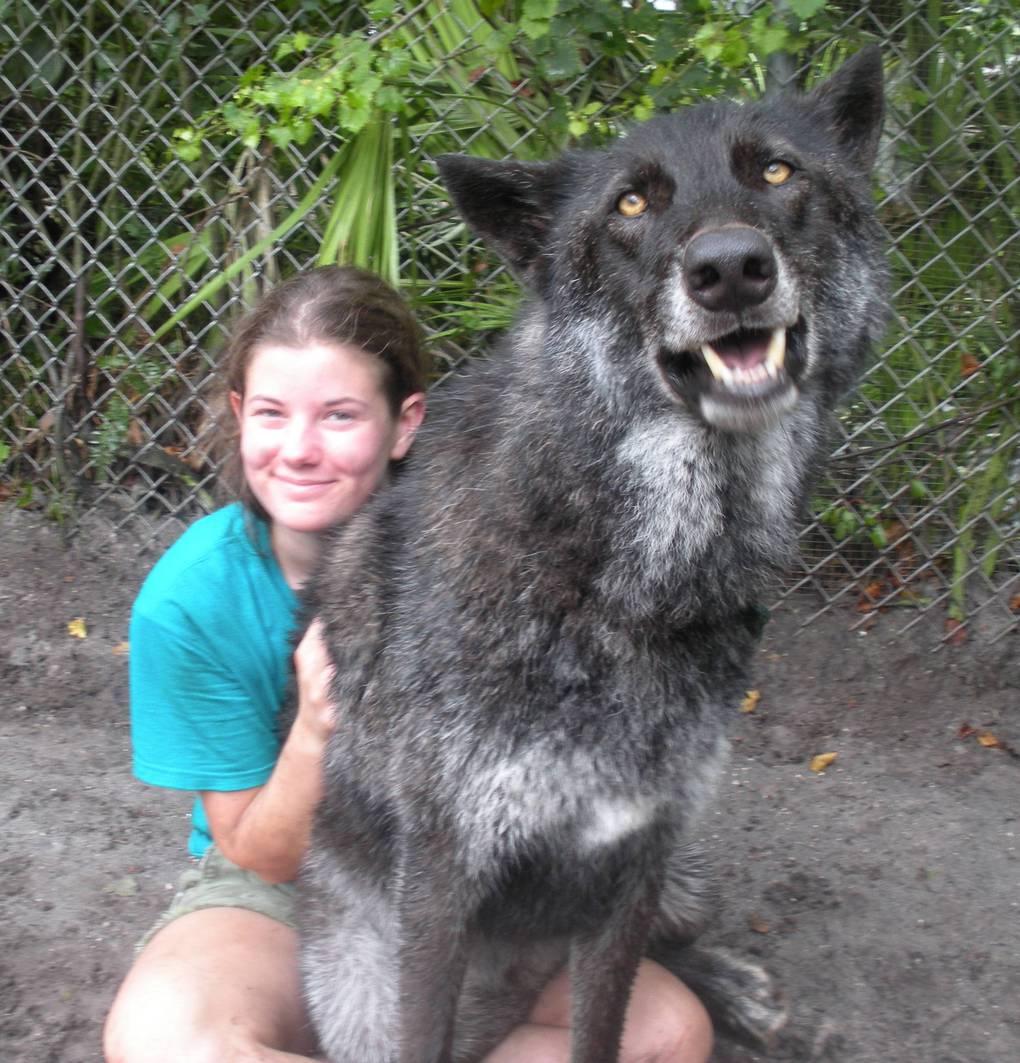 волк и девушка рис 2