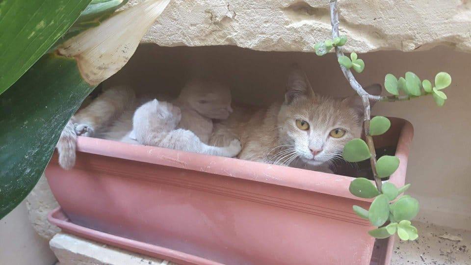 коты в цветочном горшке