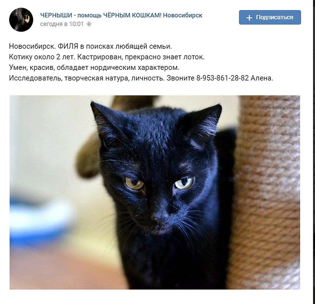 объявление о коте