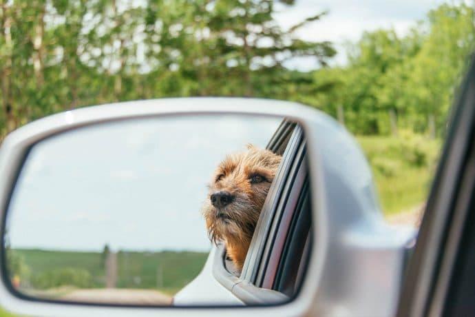 собака в зеркале машины