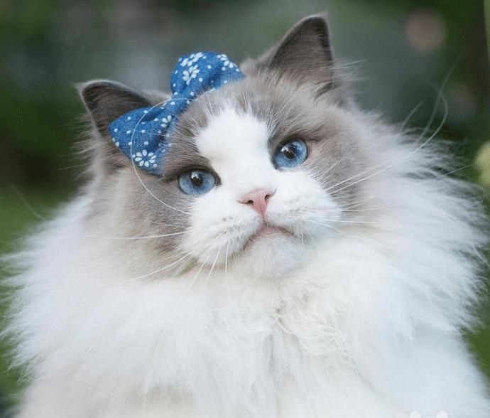 Кошка с бантом