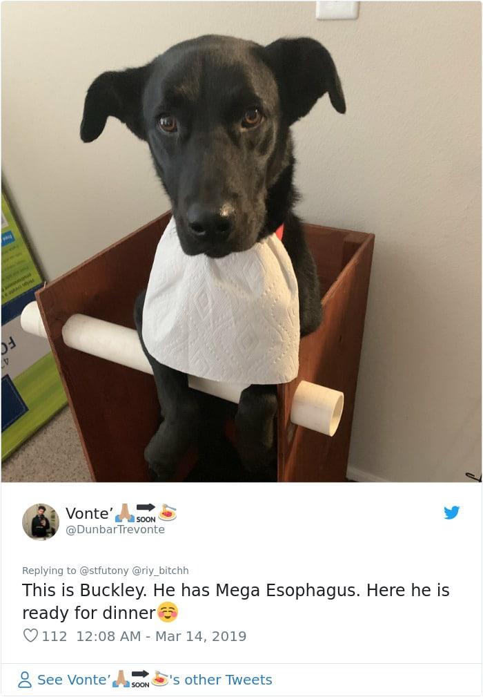 собака с салфеткой