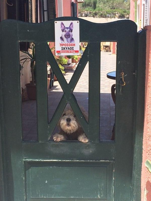 собака за забором рис 3