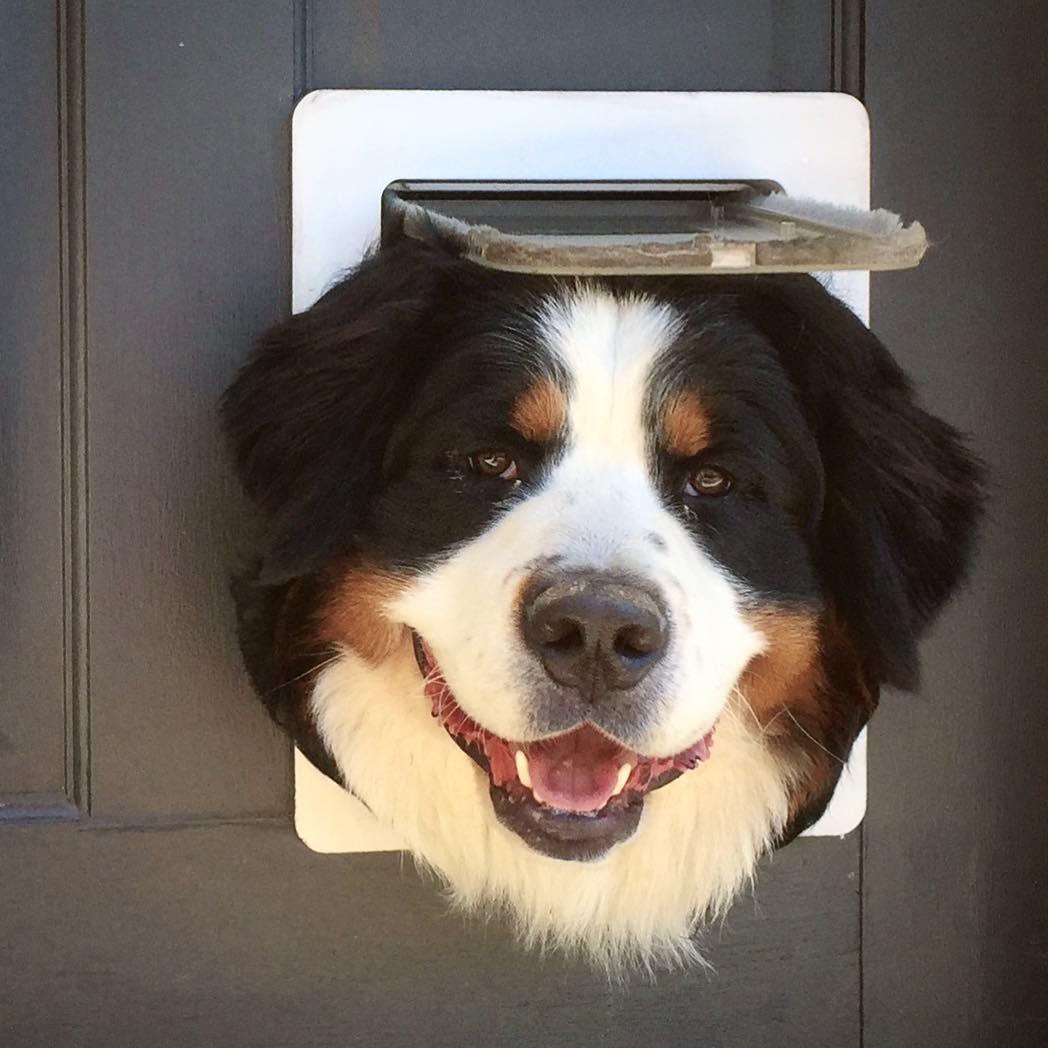 собака в двери