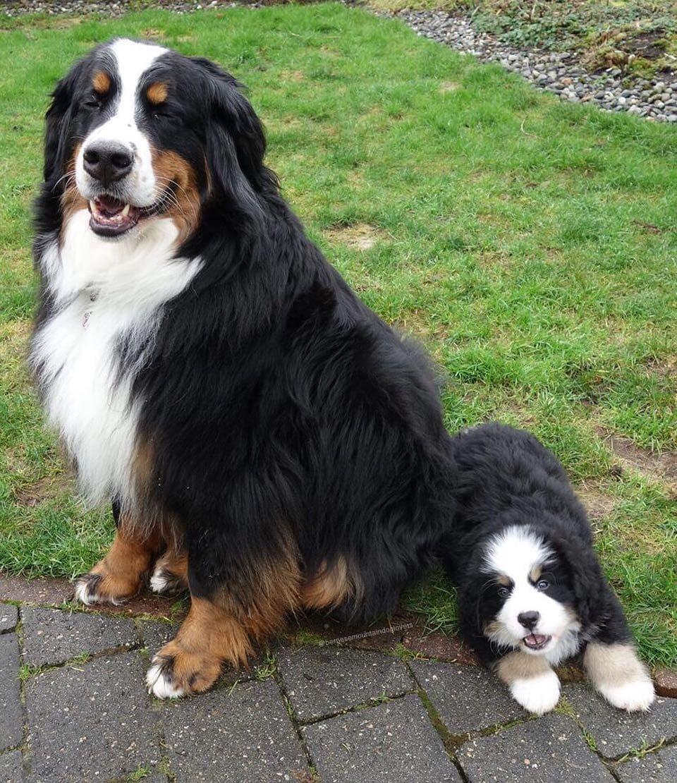 собака со щенком