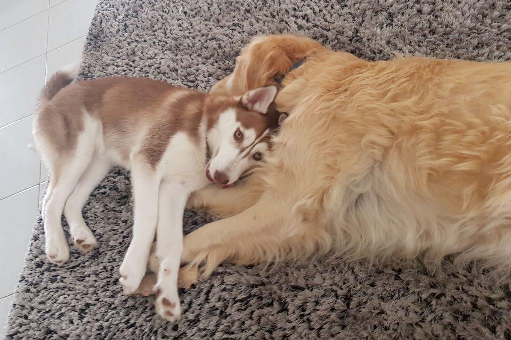 две собаки рис 3