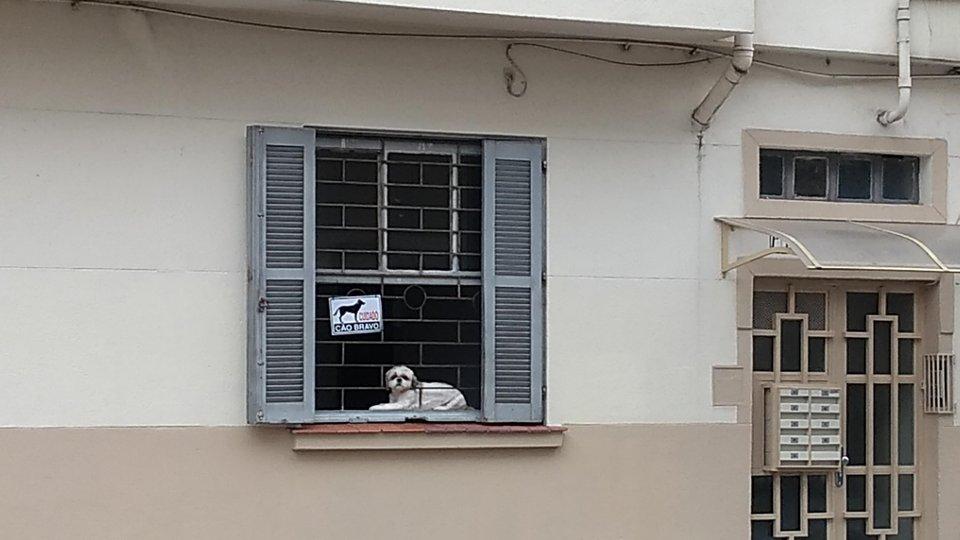 собака на окне
