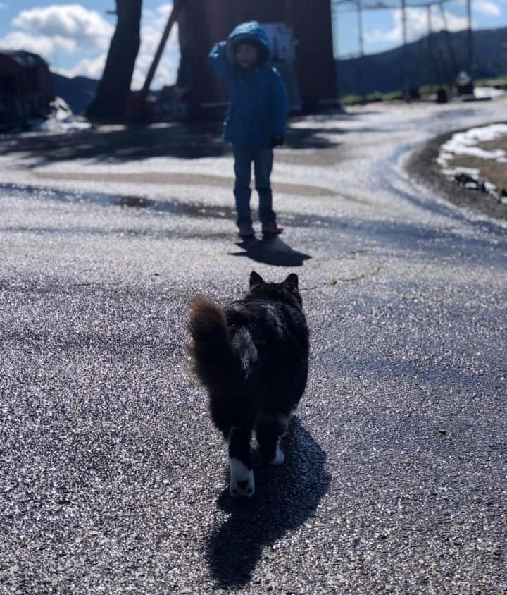 девочка гуляет с котом