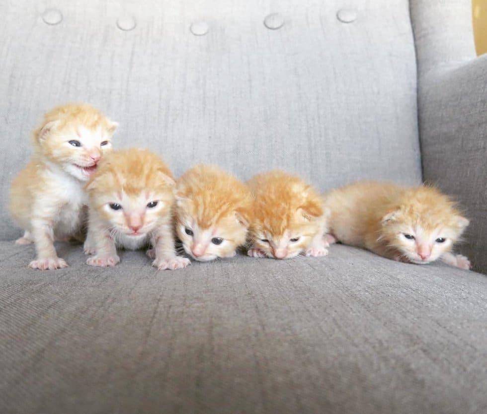 рыжие котята рис 2