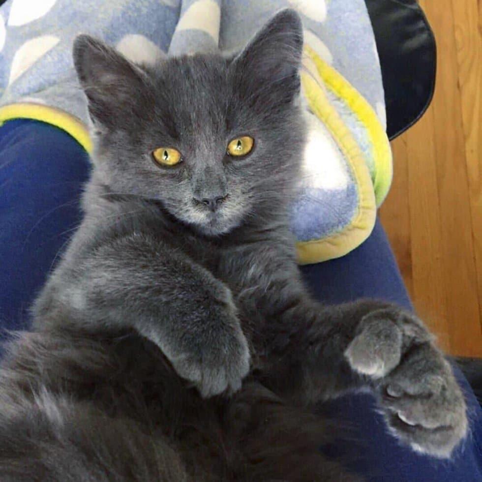 серый кот рис 3