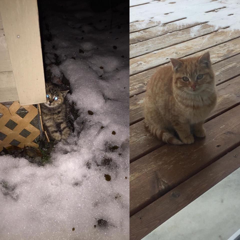 котята на улице