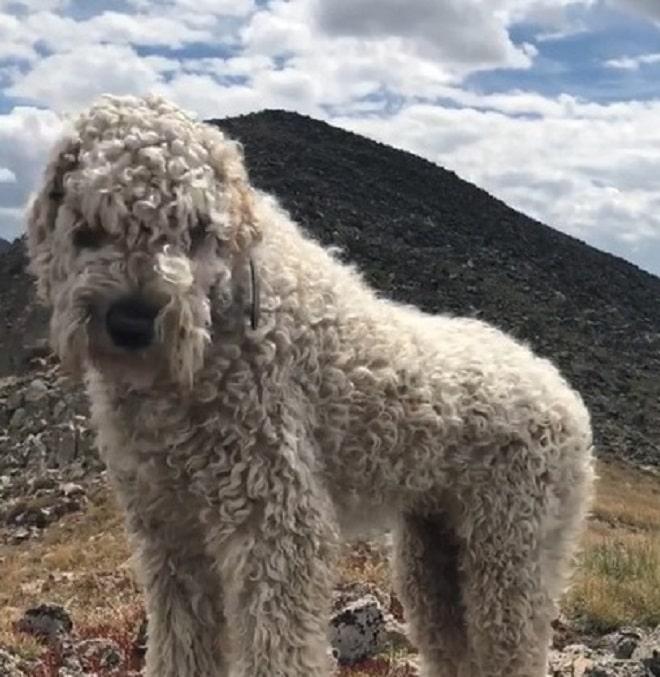 Собака на фоне гор