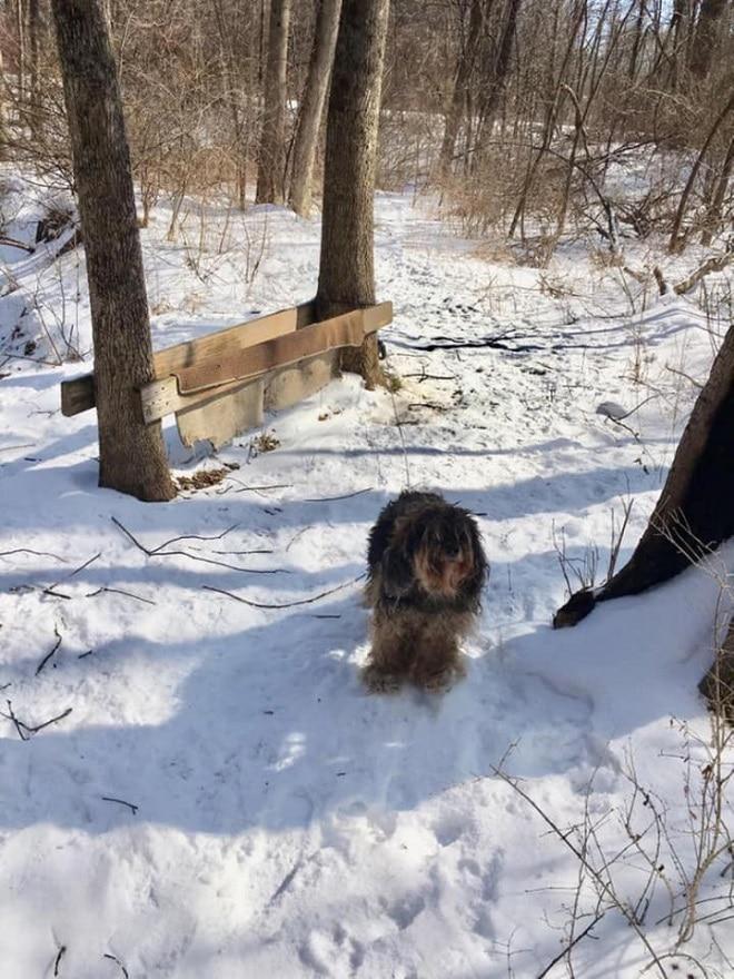 Пес зимой