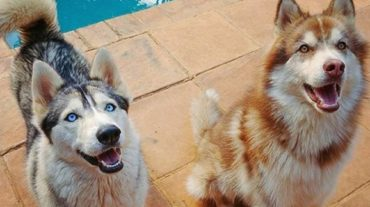 Dogs near the pool