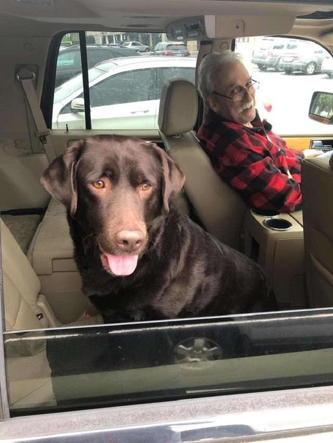 Собака на заднем сиденье