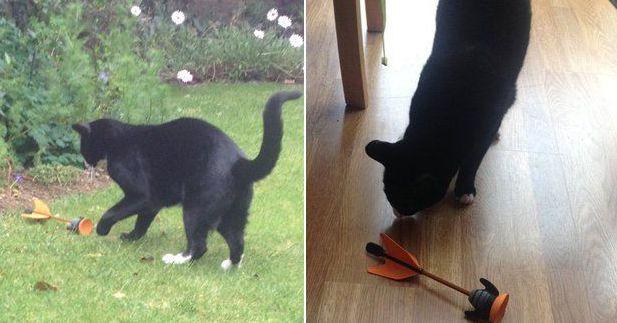 Кот и стрела