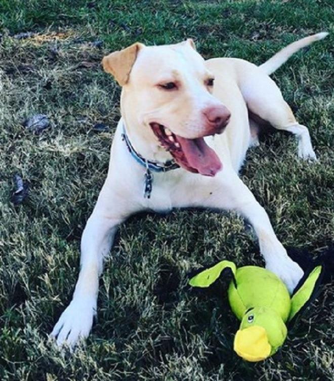 Пес с игрушкой